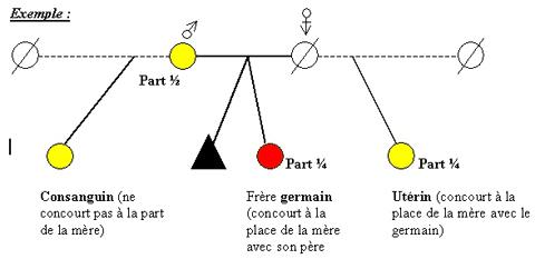 Schéma descriptif des relations héréditaires (consanguin, germain et utérin)